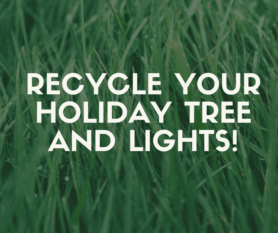 Holiday Tree Recycling